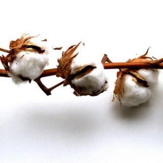 le coton pour la vape et les vapoteurs